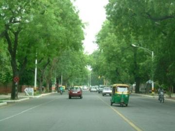 Trees Delhi